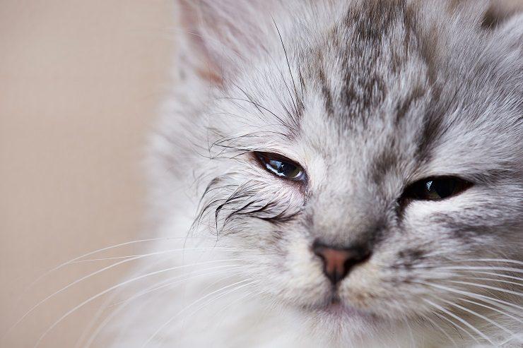 涙目の子猫の画像
