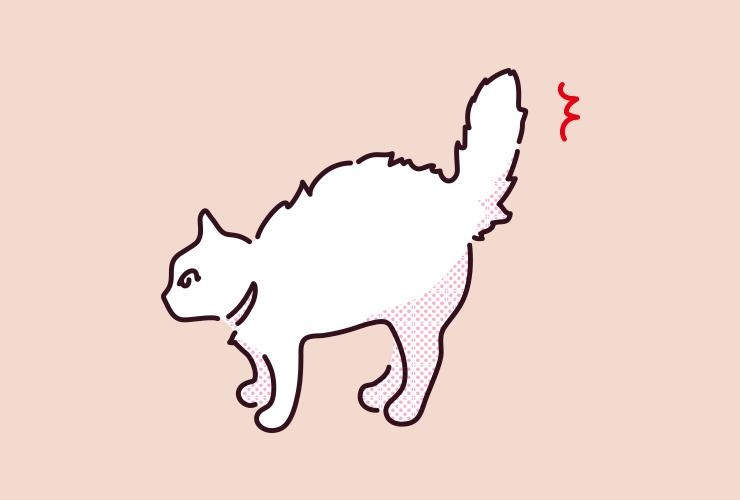 猫のしっぽが膨らむときのイラスト