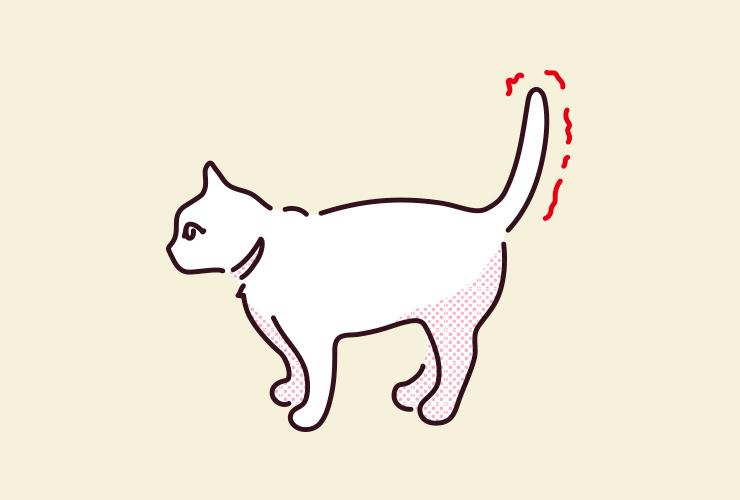 しっぽ 振る 猫