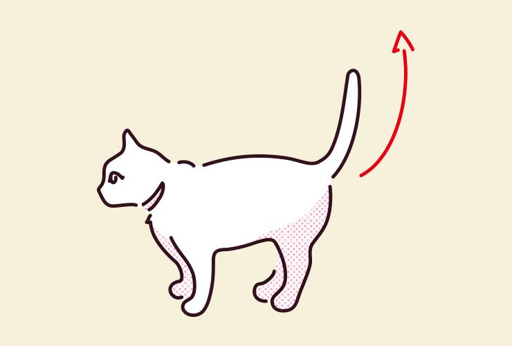 猫がしっぽをピーンと立てているイラスト