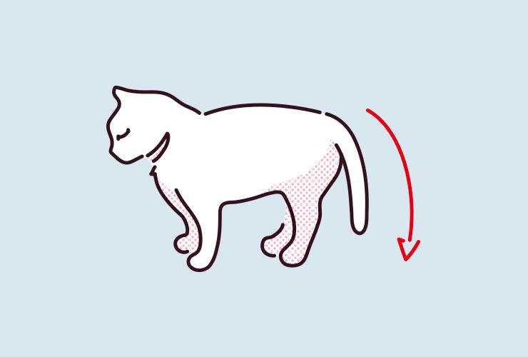 猫がしっぽをだらんと下げている様子の画像