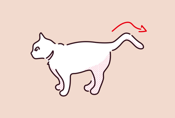 振る 猫 しっぽ