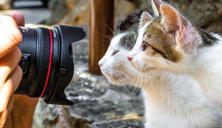 カメラのレンズをのぞき込む2頭の猫