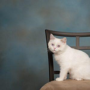ミヌエットの画像