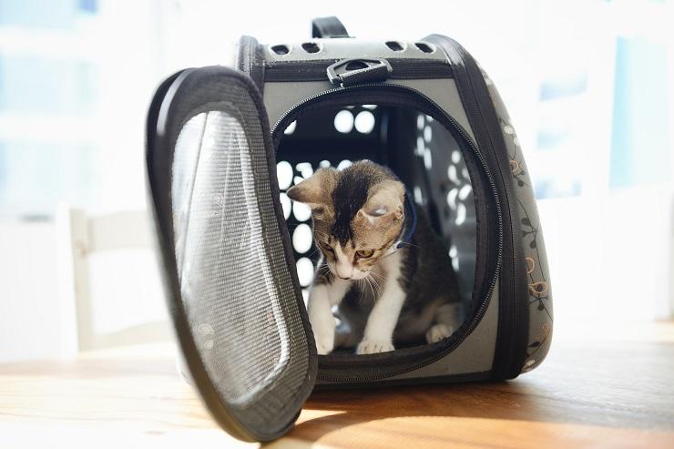 子猫が持ち運び用ケージに入っている