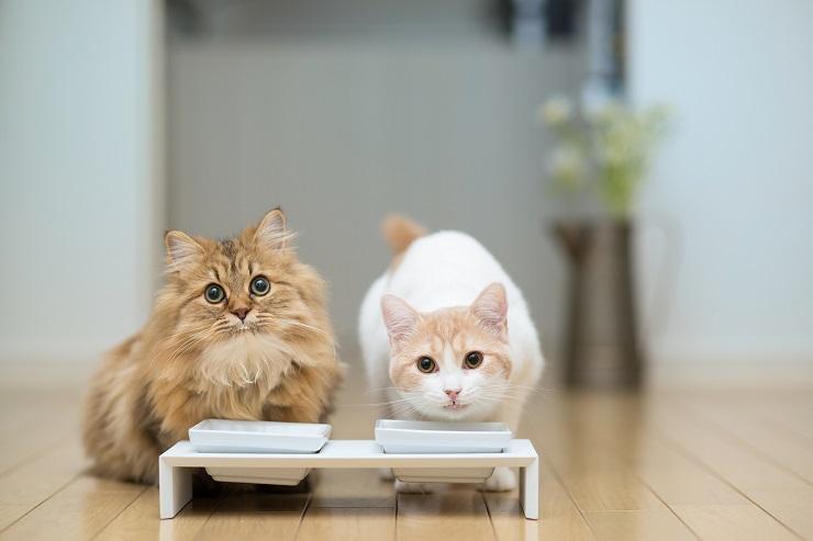 台つきのフードボールでごはんを食べる2頭の猫