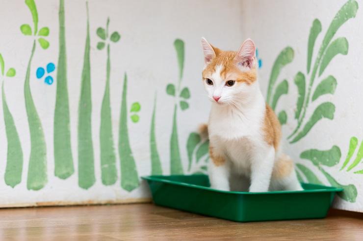 トイレでおしっこをする猫