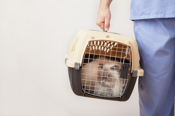キャリーバッグに入れられて移動する猫