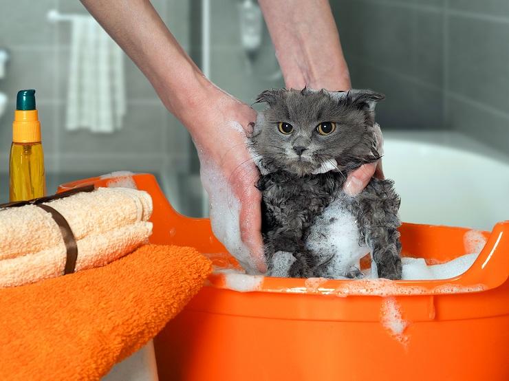 お風呂に入って泡だらけの猫