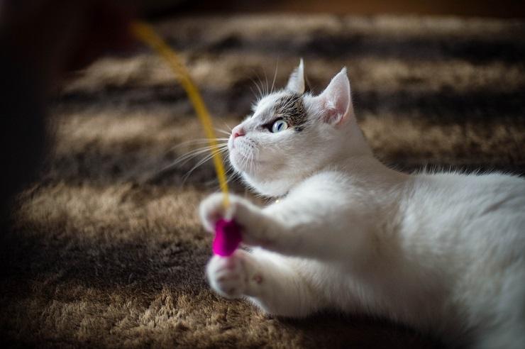 絨毯の上で猫がおもちゃで遊んでいる