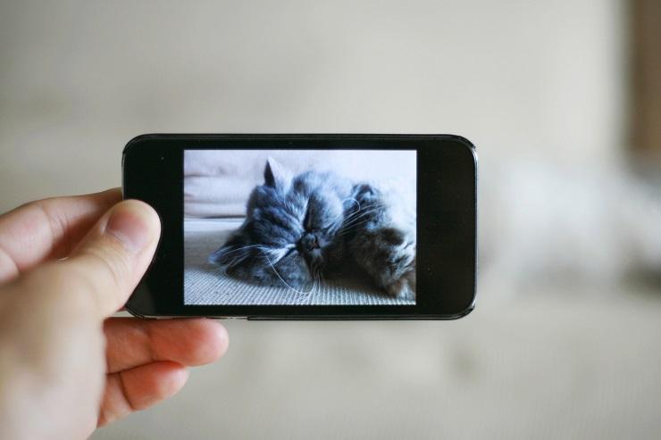 寝ている猫の姿がスマートフォンの画面に映っている