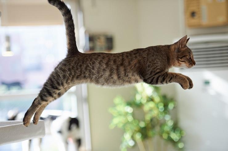 猫が飛び移る瞬間