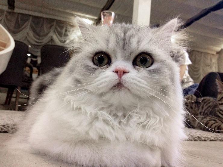 目が真ん丸の猫が映っている