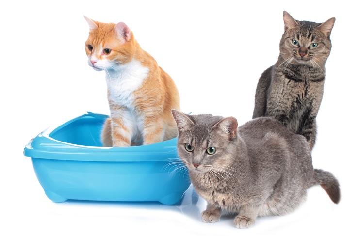 1匹トイレしている猫の隣に2匹の猫がいる