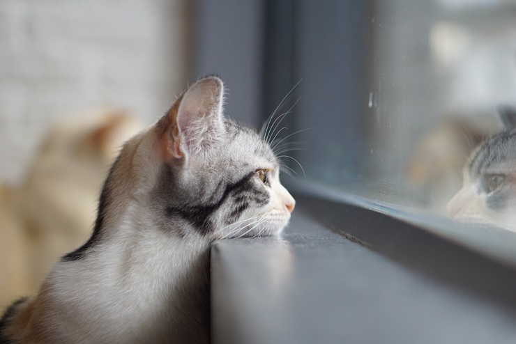 窓辺で外を見ている猫