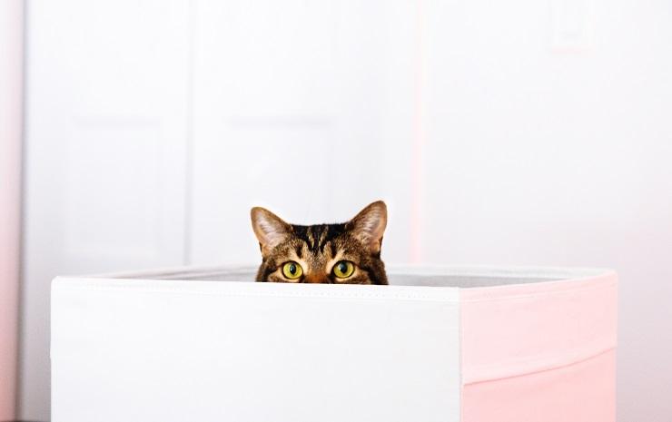 箱から顔をのぞかせる猫