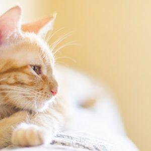 横を向いている猫の画像
