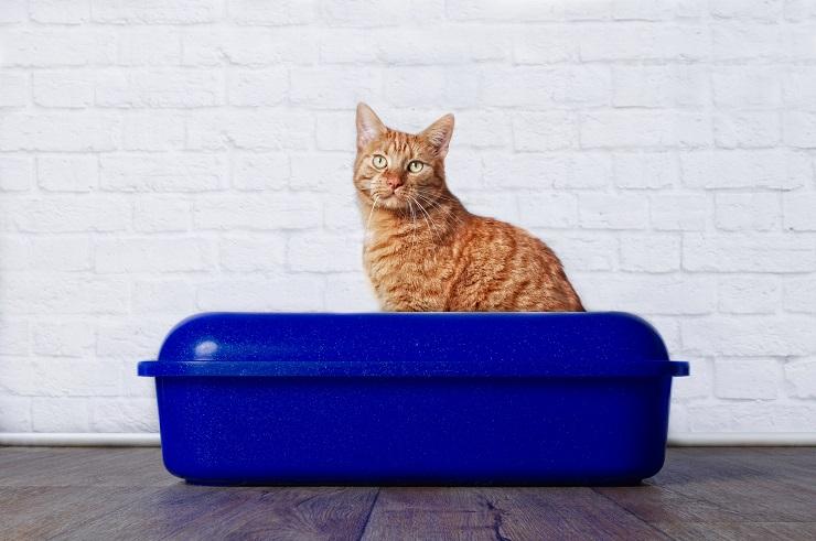 トイレにたたずむ猫