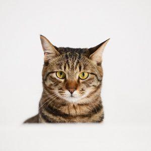 きょとんとした表情の猫