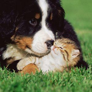 子犬と戯れる子猫