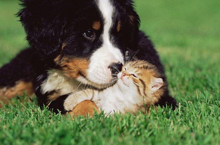 猫は犬に比べてお金がかからないって本当? | 猫との暮らし大百科