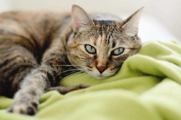 緑の毛布の上で横たわる猫
