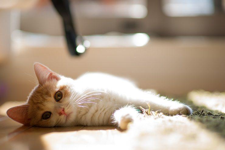 部屋の中で横たわった子猫の画像