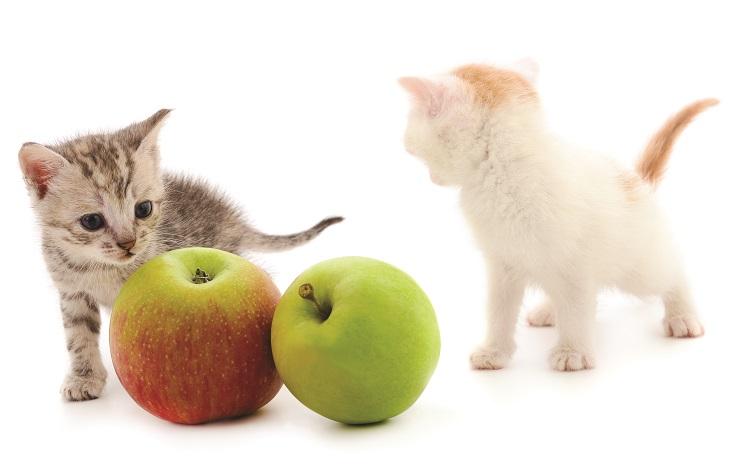 猫とりんご
