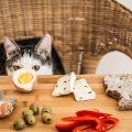 テーブルの上にある卵を見つめる猫