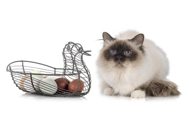 猫と卵の写真