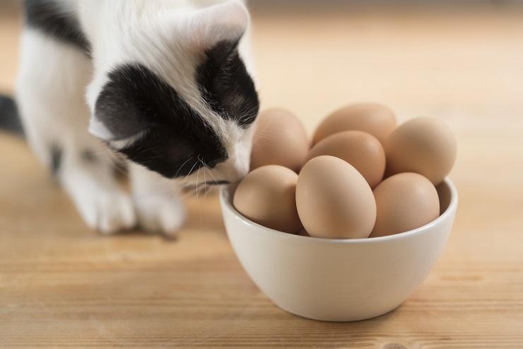 卵を嗅ぐ猫