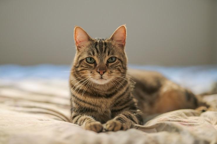 ベッドにたたずむ猫の写真