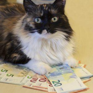 お札の上で伏せている猫の画像