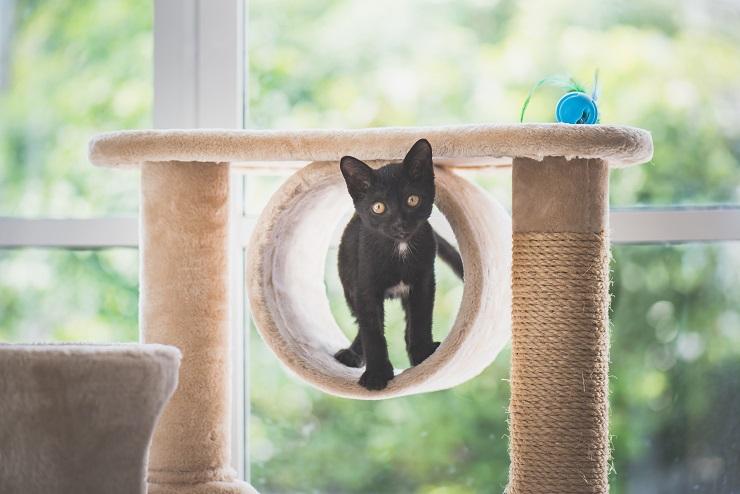 キャットタワーと子猫の写真