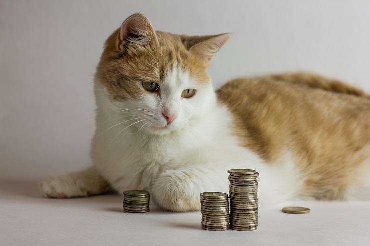小銭を見つめる猫の写真