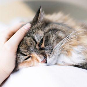 横たわる猫の写真