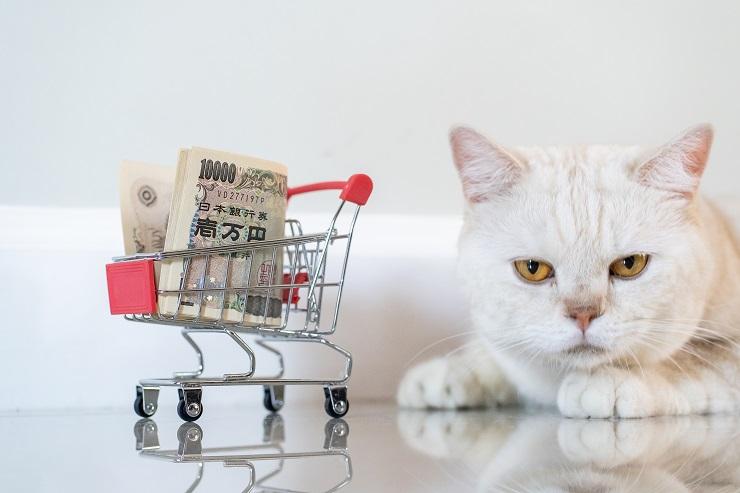 お金を見つめる猫の写真