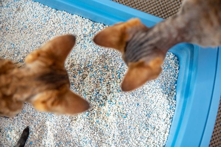 トイレを覗く二頭の猫