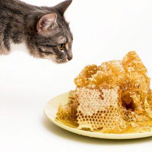 ミツロウを見つめる猫