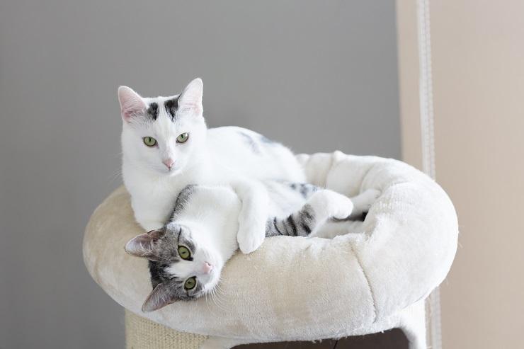 じゃれあう二頭の猫