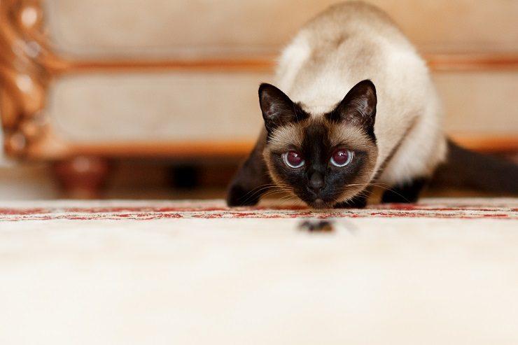 獲物を狙う猫の画像