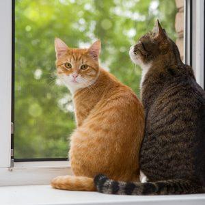 窓から外を眺める2頭の猫