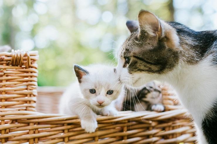 子猫の様子を伺う母猫
