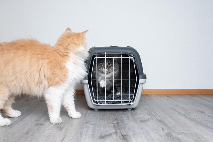 ケージに入った猫を外から見る猫