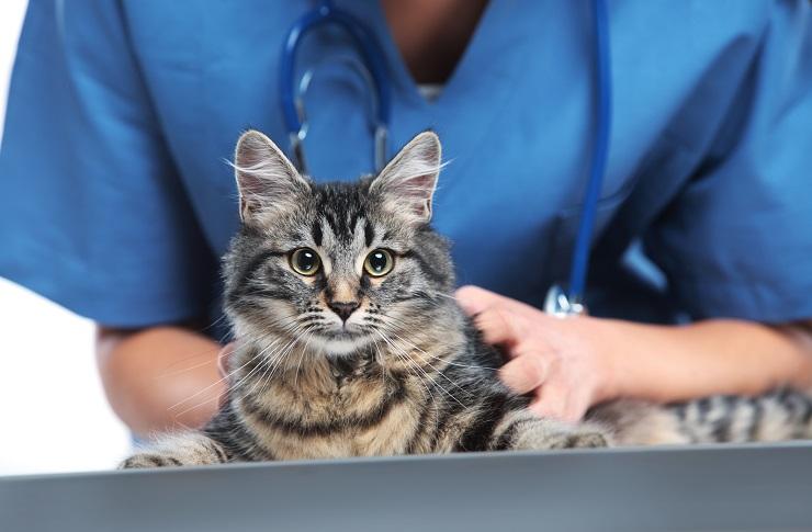 診察されている猫