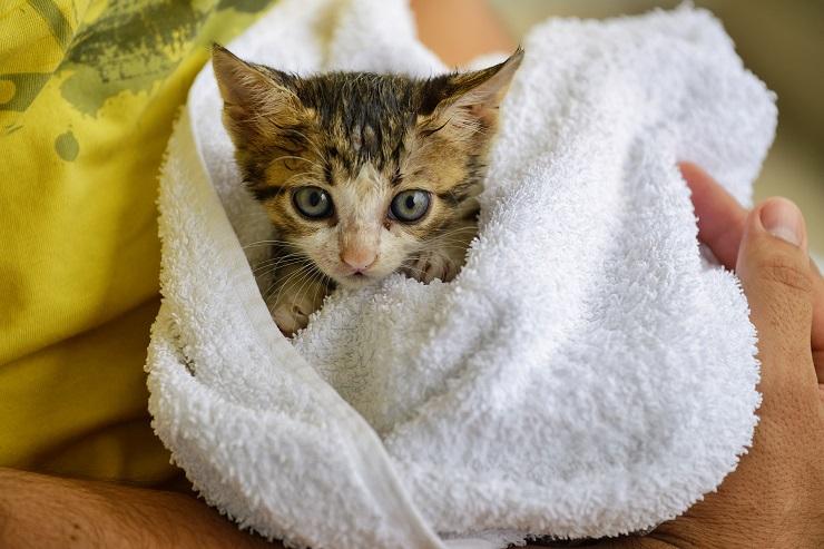 タオルに包まれた子猫