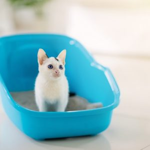 トイレにいる子猫