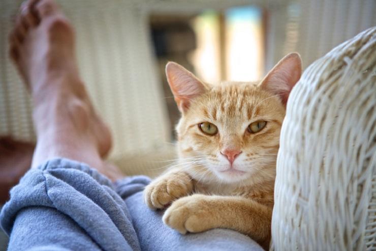 人の膝の上に手をのせる猫