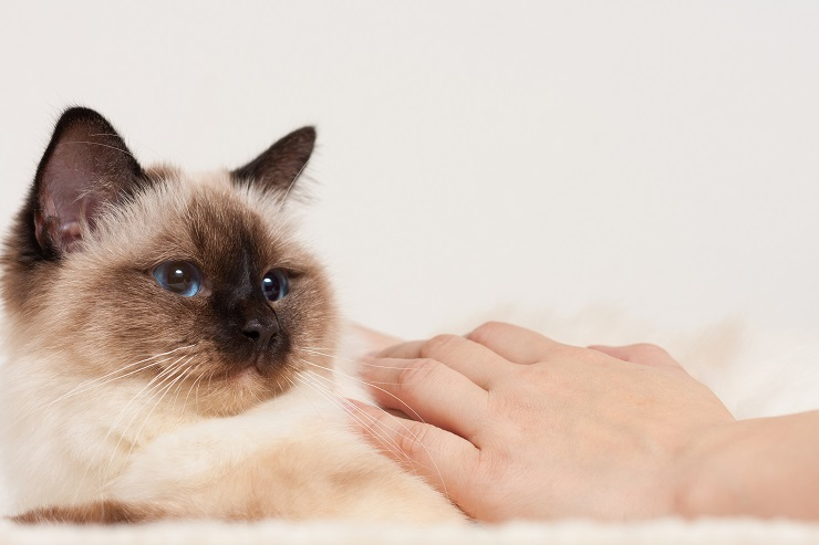 猫をb撫でる様子