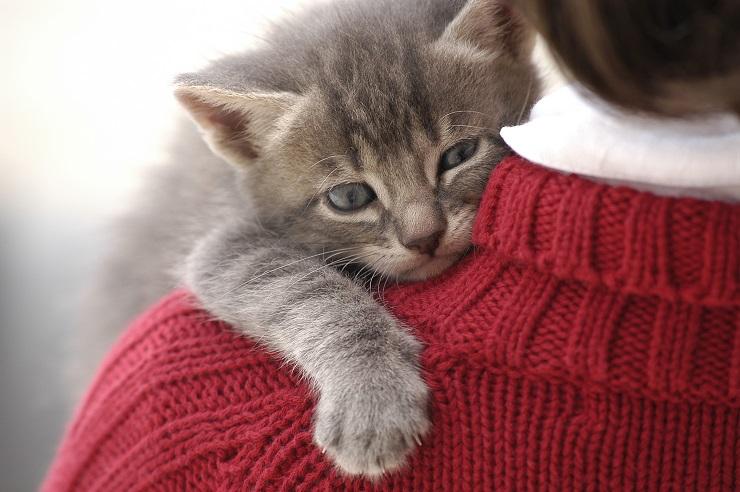 女の子の方に抱っこされる子猫